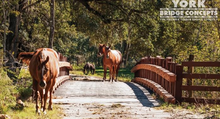 Cone Ranch